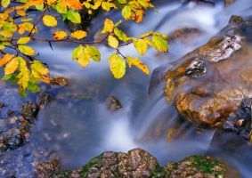 Autumn in river by lica20